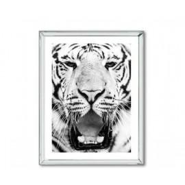 Obraz Biały Tygrys 66x86